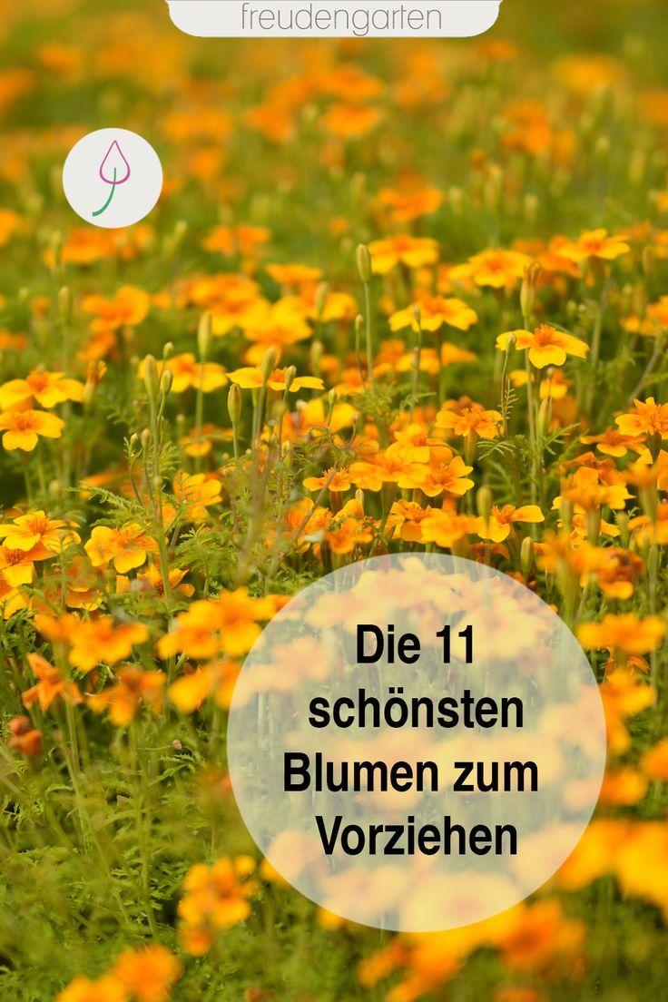 11 einjährige Sommerblumen zum Vorziehen #blumenbeetanlegen