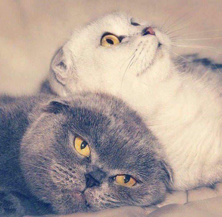 проблемой, когда картинки котик дорогой любимый много