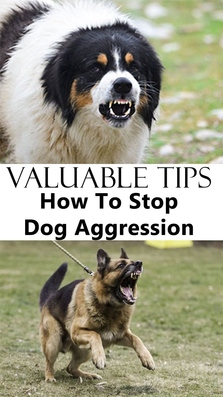 How To Stop Dog Aggression Aggressive Dog Dog Training Tools