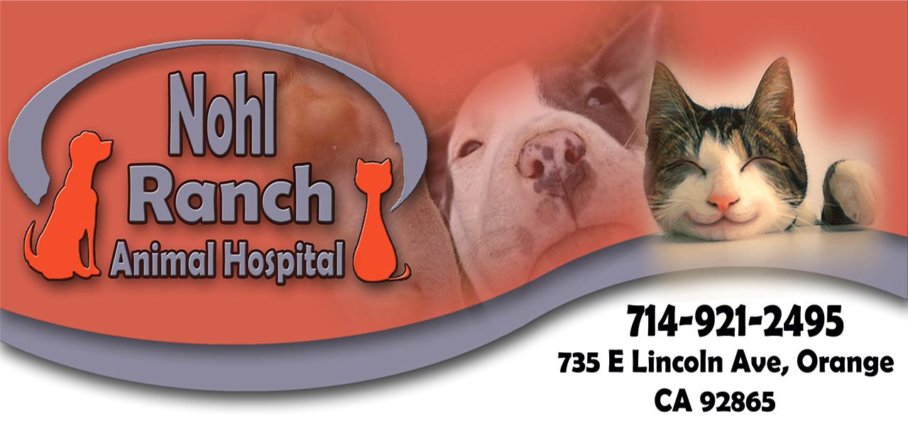 A safe home for your pet. Our hospital provides the best