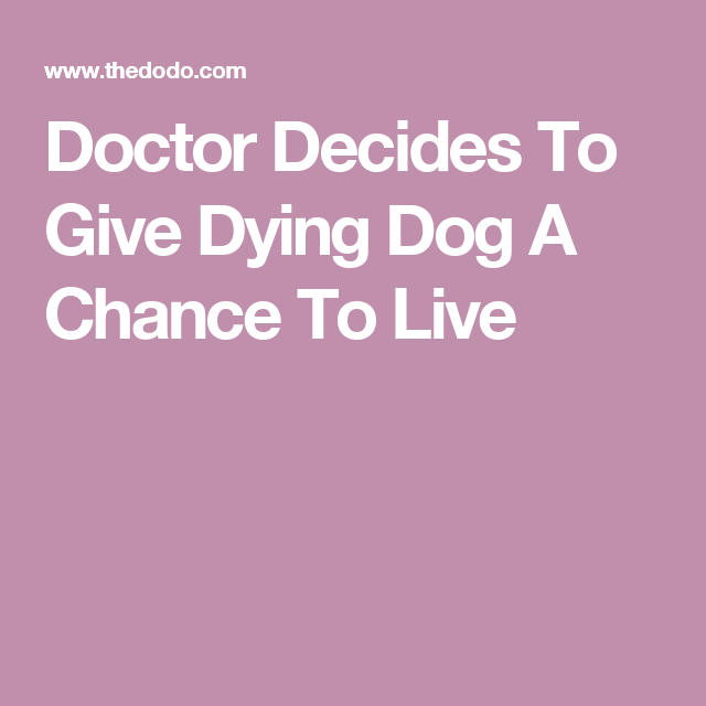 Doctor Decides To Give Dying Dog A Chance To Live
