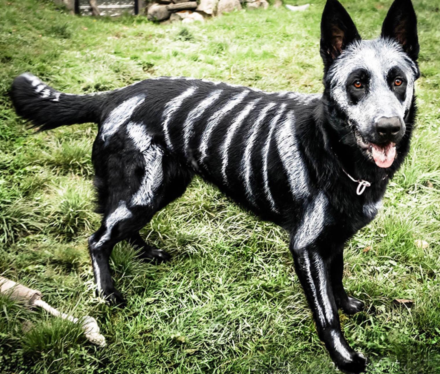 disfraces+de+halloween+para+perros+esqueleto.png (1522