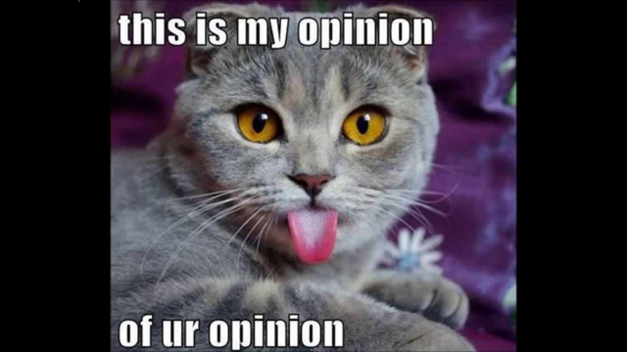 Best Of Funny Cat Memes 2015 Youtube Funny Cat Memes Cat Scottish Fold Crazy Cats