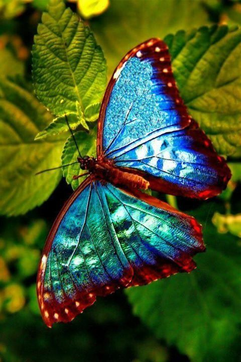 Pin On Colors Of Nature