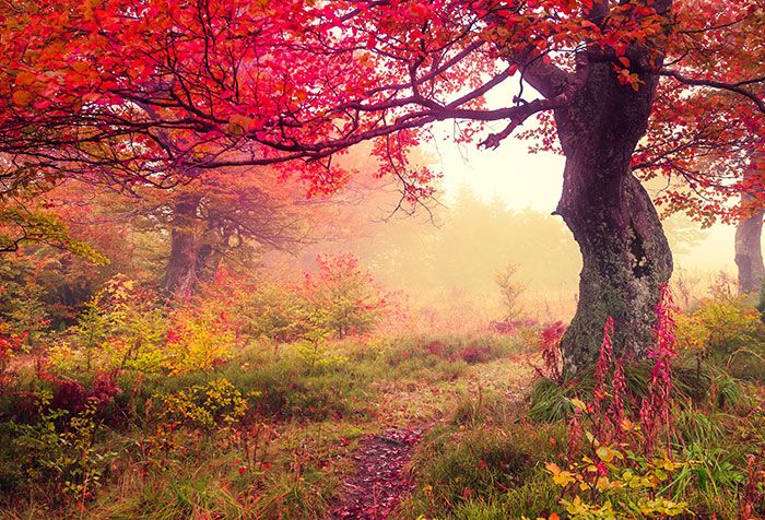 Shop For Autumn Trees In Forest Wallpapers In Nature Landscapes