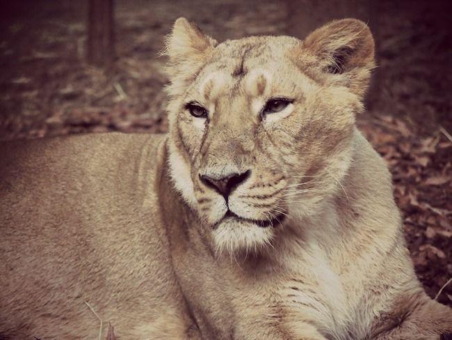 2012 11 4 Sun. Zoo - xoxo HiLAMEE