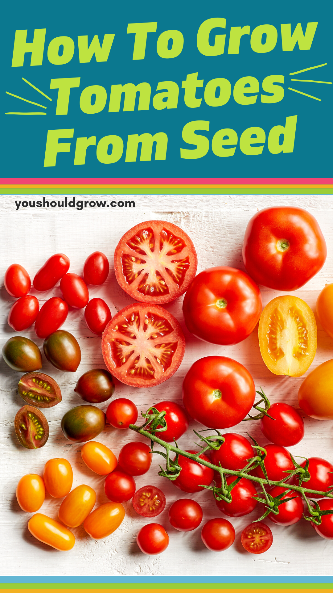 Growing Tomatoes From Seed You Can In 2020 Growing Tomatoes Growing Tomatoes From Seed Tomato