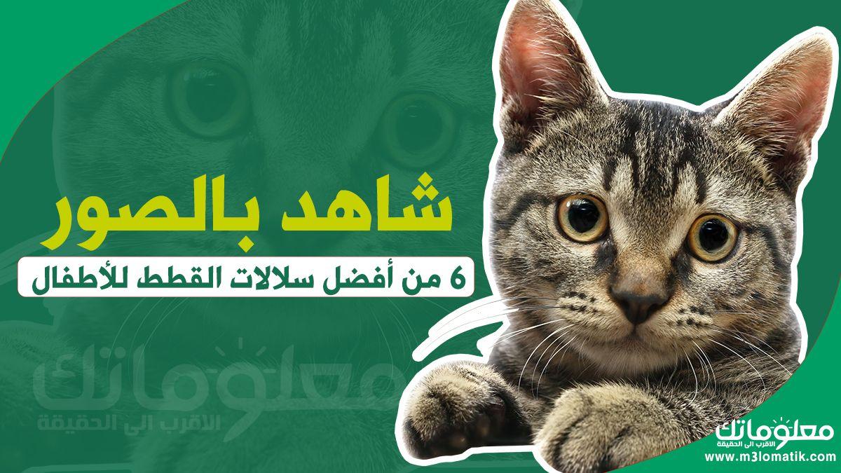 شاهد بالصور 6 من أفضل سلالات القطط للأطفال Cats Animals