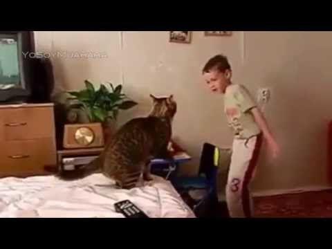 gato vs niño Videos De Gatos Graciosos, Gatos Chistosos, Reacciones De Gatos, Ataques - http://lindito.net/gato-vs-nino-videos-de-gatos-graciosos-gatos-chistosos-reacciones-de-gatos-ataques/
