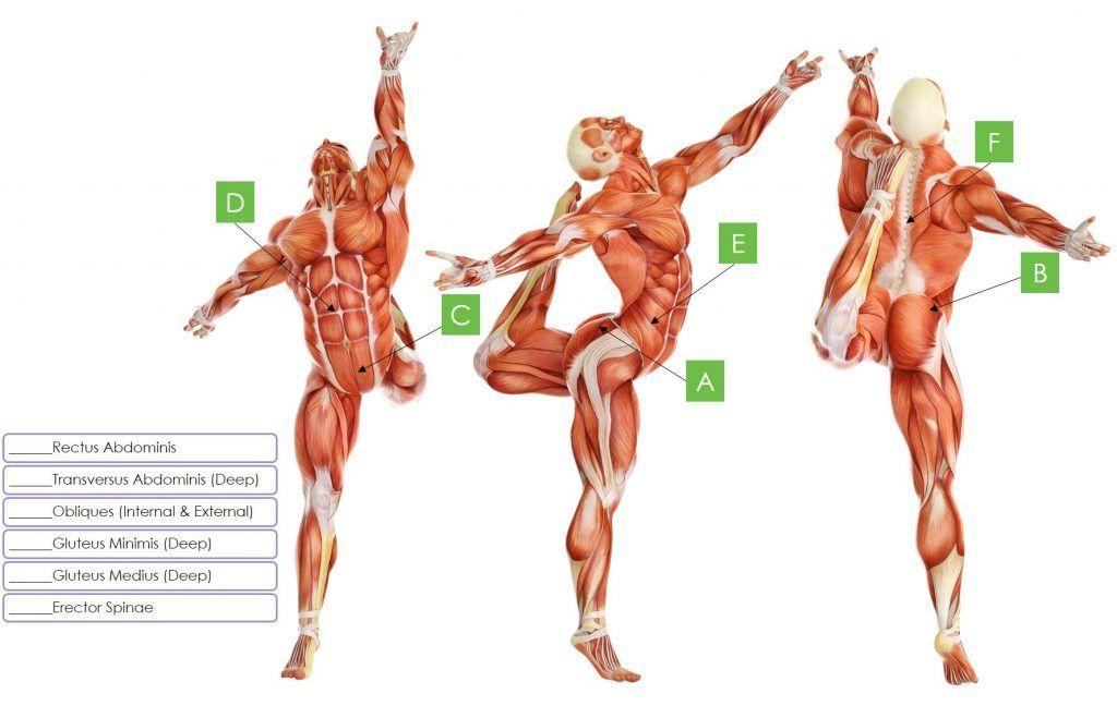 core-muscle-matching | Research Corner | Pinterest | Anatomy, Muscle ...