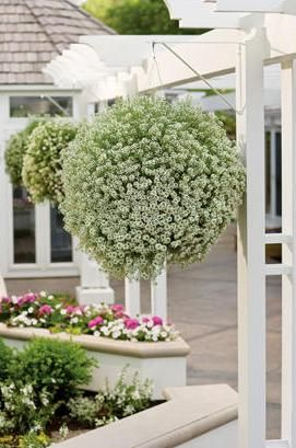 Proven winners article hope for hanging baskets - Summer hanging basket ideas ...