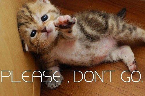 Please Don T Go Cute Animal Photos Kittens Funny Adorable