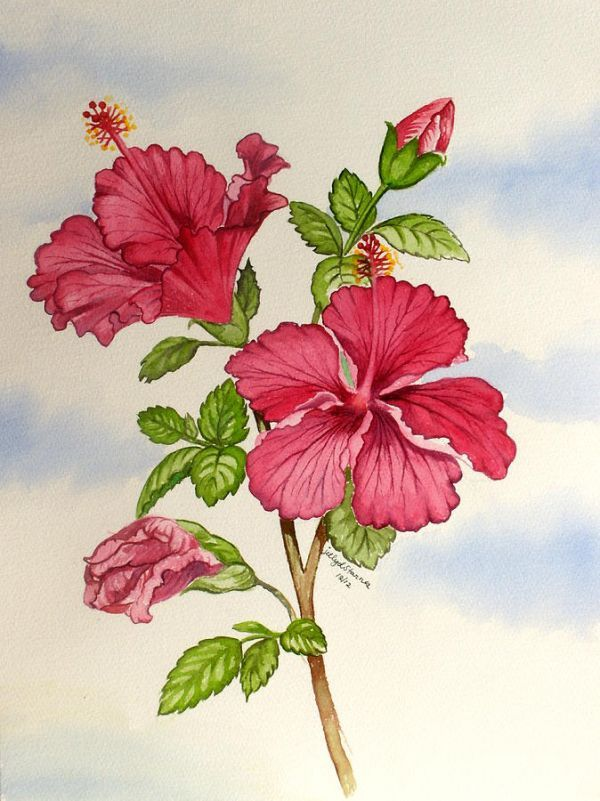 Red Hibiscus Flower Painting Flower Painting Hibiscus Drawing