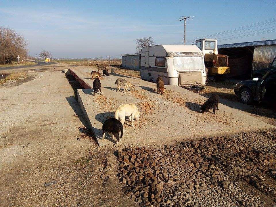 Feeding the strays in Romania