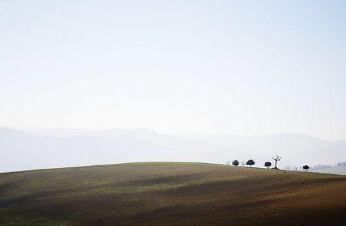 sulle colline di Romagna