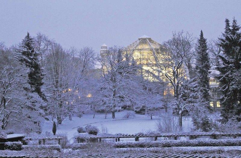 Botanischer Garten Im Winter Outdoor Berlin