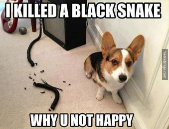 How To Stop Your Pet From Chewing On Power Cords Funny Animal Quotes Funny Animals With Captions Animal Jokes