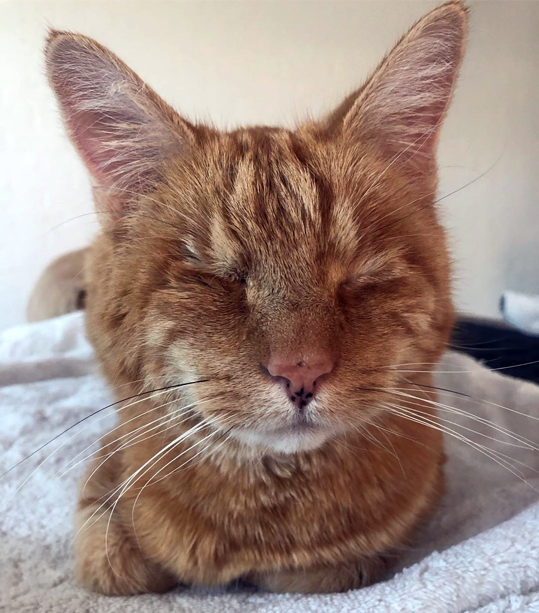 Meet The Handsome Blind Cat Who Found An Amazing Home After Being Given Away For Free Online Cats Orange Cats Orange Cat