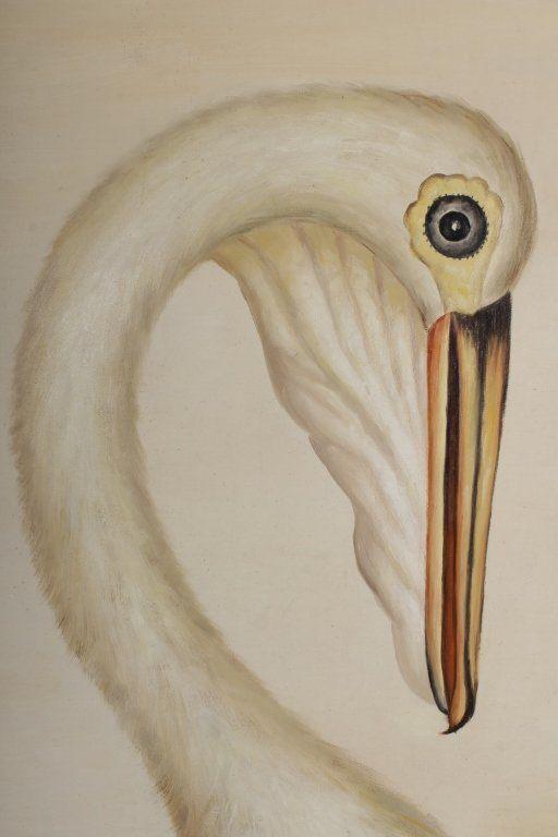 After George Raper Australian White Pelican 20th 21st Century