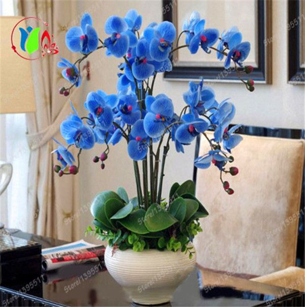 100 bonsai pinterest. Black Bedroom Furniture Sets. Home Design Ideas