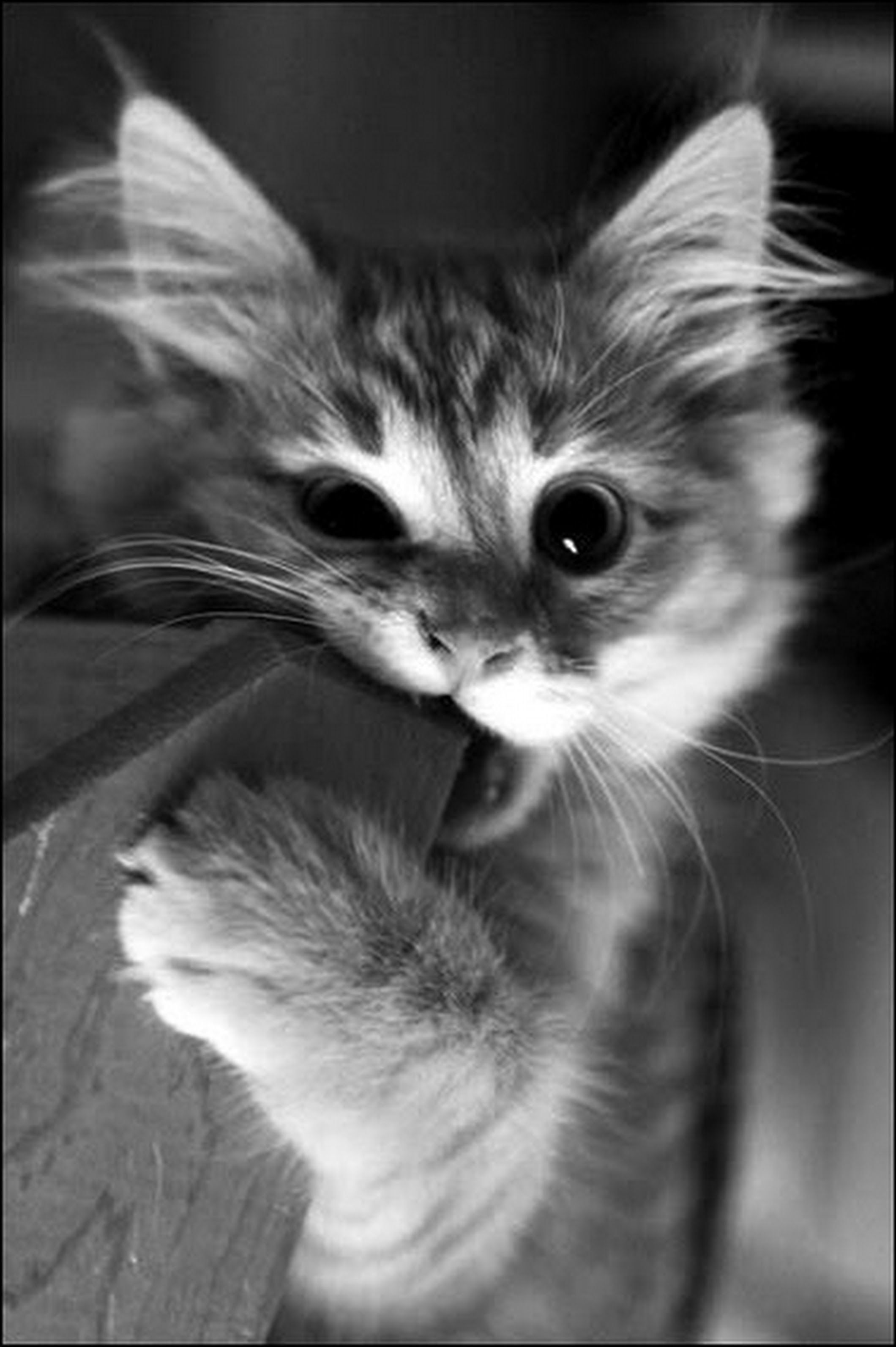 Puppies And Kittens Together Puppies And Kittens In 2020 Kitten Biting Cute Animals Kittens Cutest