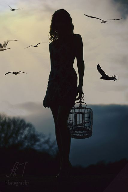 A Forest Bird Never Wants a Cage | Silhouette photography ...