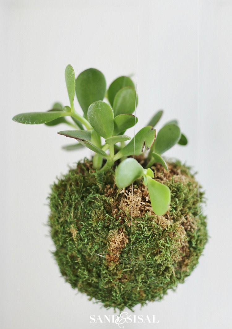 DIY Kokedama - Japanese Moss Ball Planters | Jade plants, Planters ...