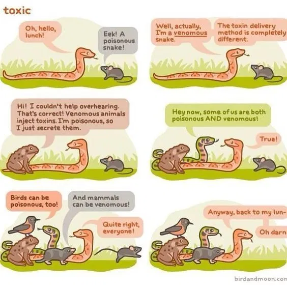 How To Tell If A Snake Is Poisonous Venomous Animals Poisonous Snakes Talking Animals