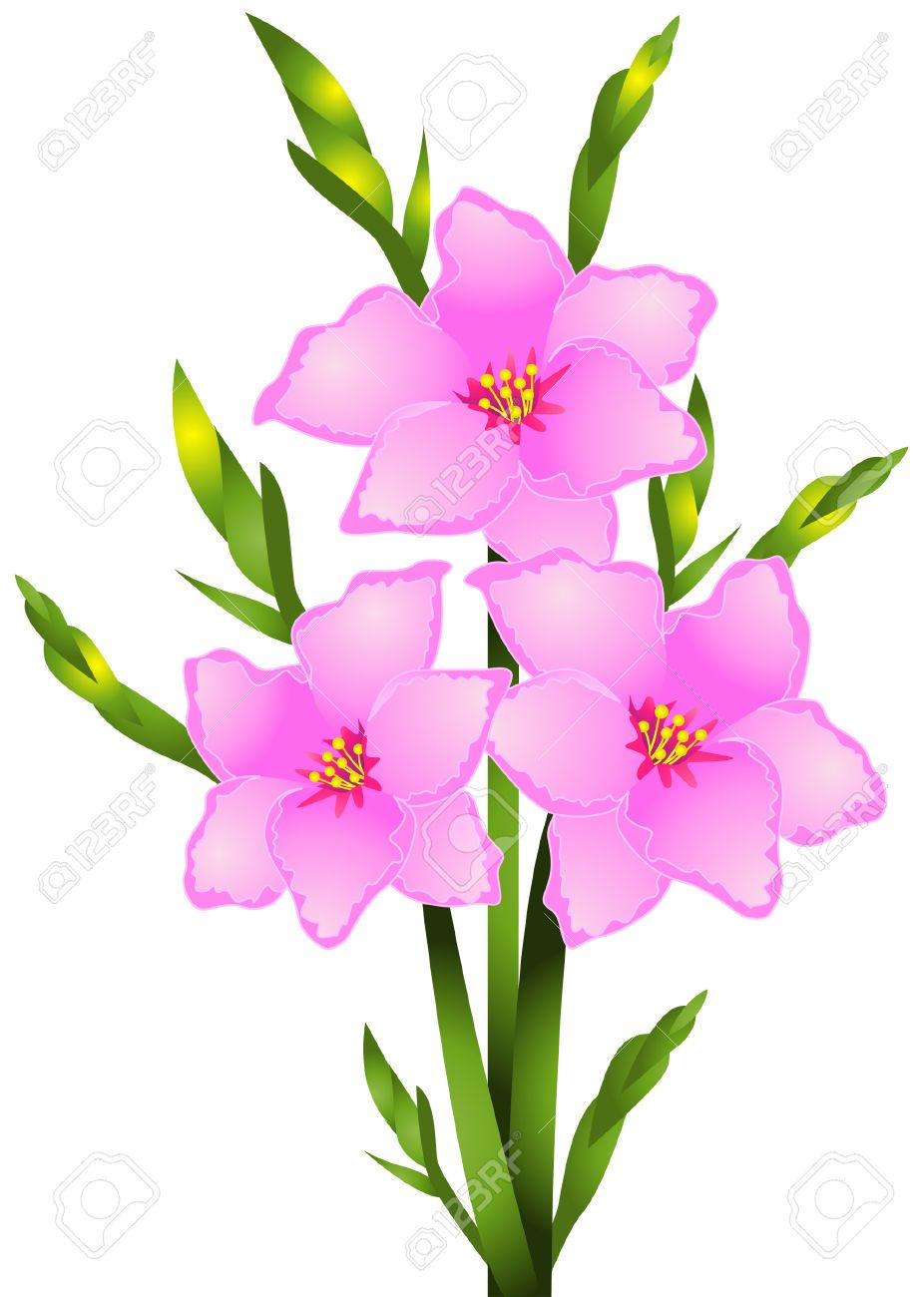 Image Result For Gladiolus Flower Outline Flower Clipart Gladiolus Flower Flower Outline
