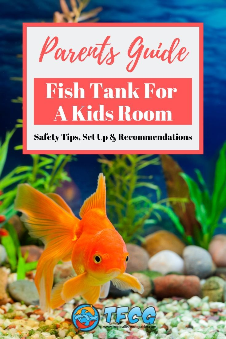 Fish Tank In Toddlers Room Safety, Set Up & Tips [Parent