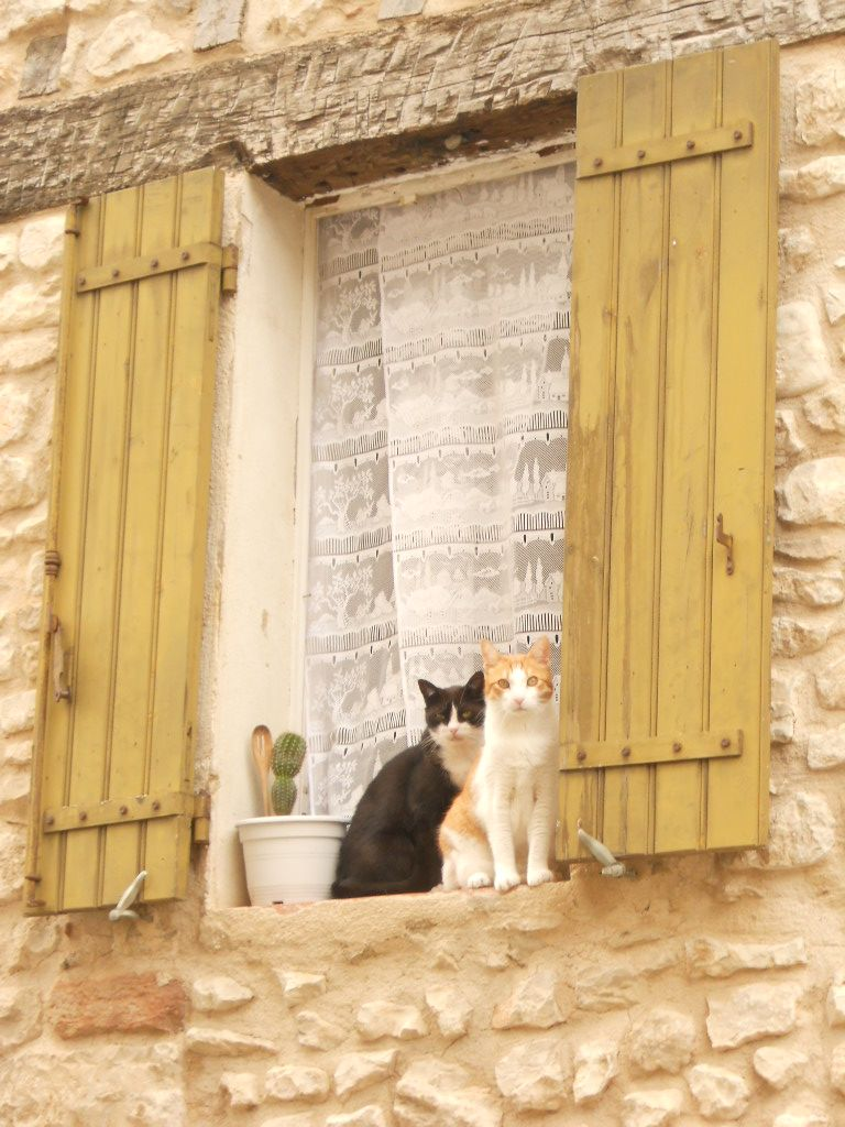 Sault Provence - Cats on the window #Abruzzoruralproperty http://www.abruzzoruralproperty.com