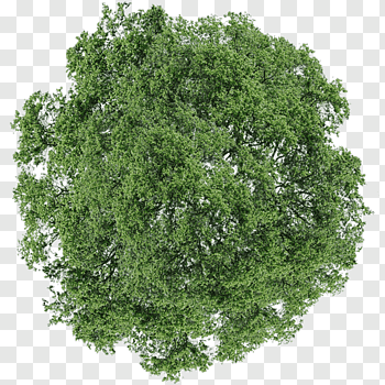 Tree Dill Shrub Tree Top View Green Leafed Tree Free Png Trees Top View Tree Plan Photoshop Tree Photoshop