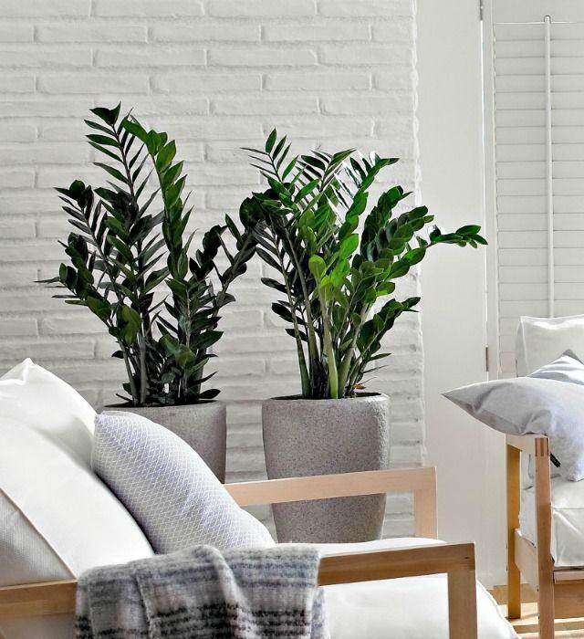 10 mejores plantas de interior macetas tiestos ramos for Mejores plantas para interior