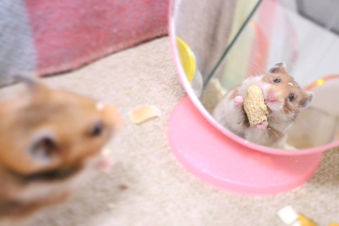 鏡に映った顔がかわいすぎる 前の写真 Funny Animal Memes Funny Animals Animal Memes
