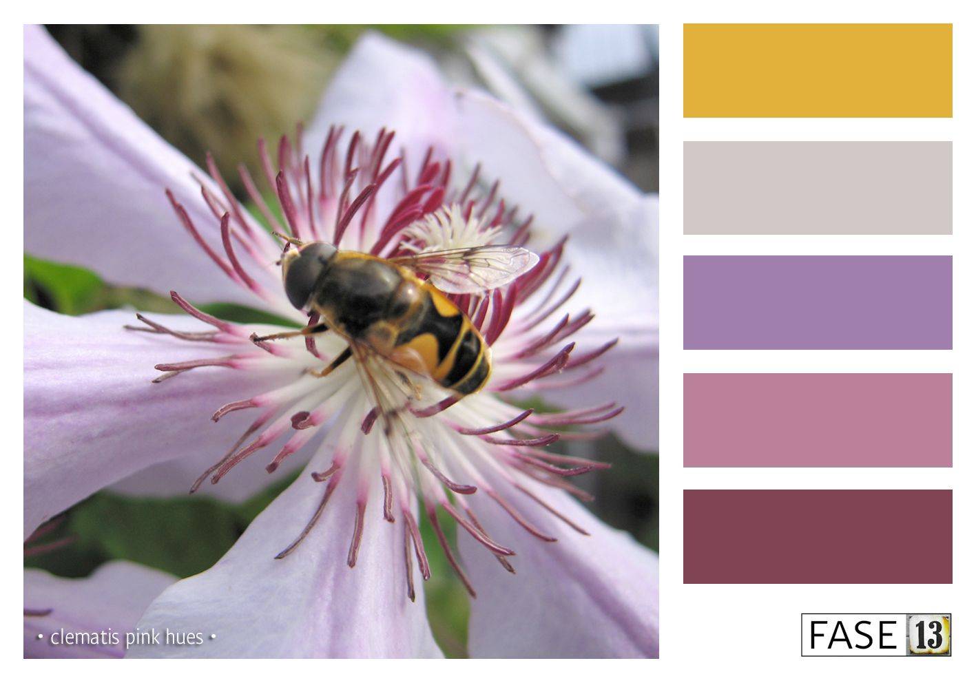 Colourinspiration kleurinspiratie clematis pink hues by fase