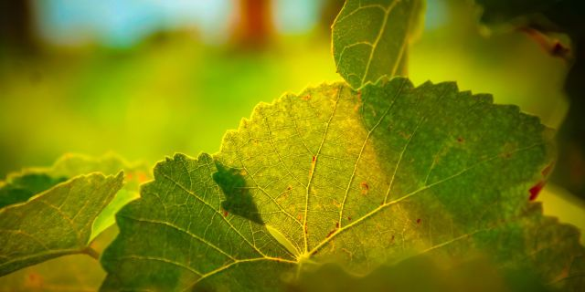 Leaves Macro Light With Images 8k Wallpaper