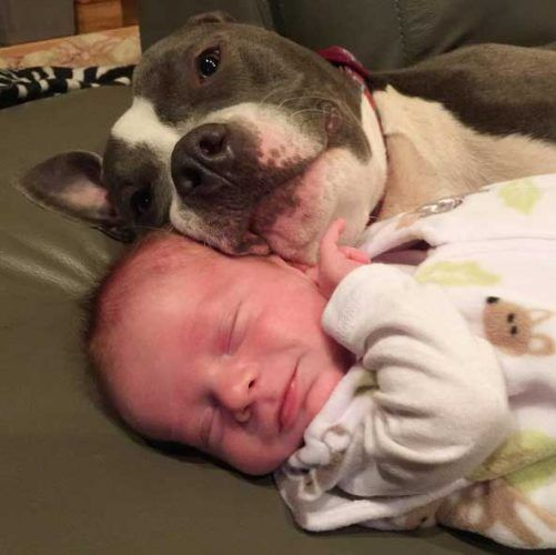 Family Who Adopted 7 Pets Now Has Their Pets Adopting Their Newborn Baby #petadoption