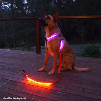 Top 12 Tech Gadgets for Dog Owners | Australian Dog Lover