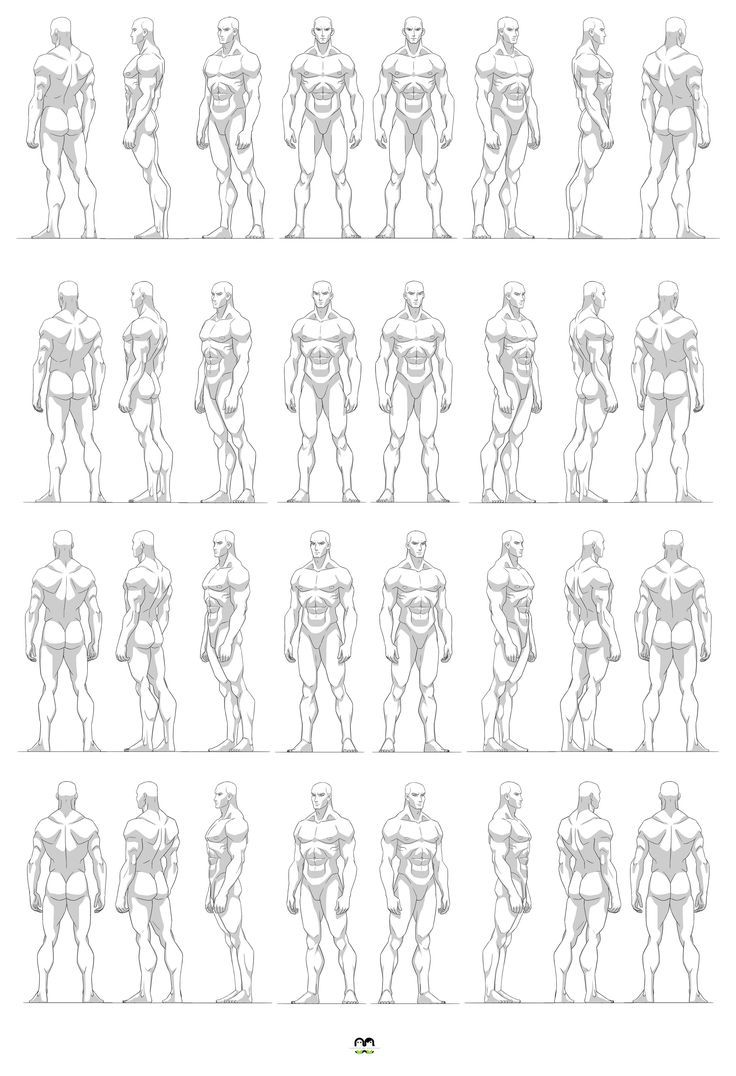 Art of Masters of Anatomy* | A Character Design Sheet Templates ...