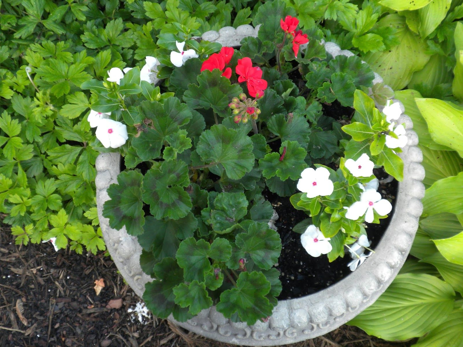 Panoply Plan Now Annual Flower Container Ideas Mi Jardin