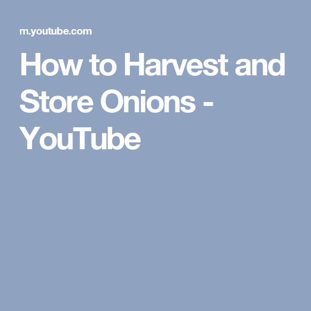 How to Harvest and Store Onions - YouTube