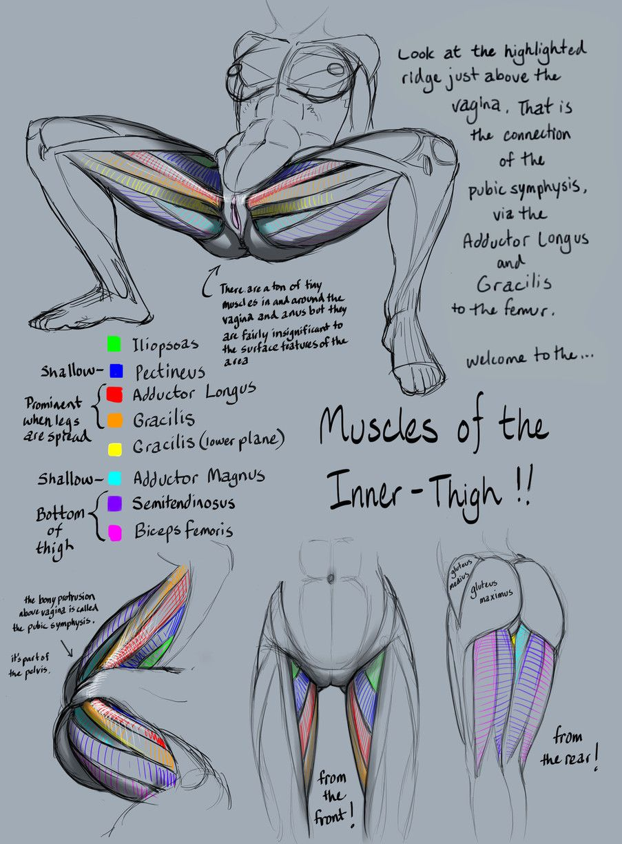 Tutorial Anatomy: Muscles of the inner thigh by rinayun | Art - How ...