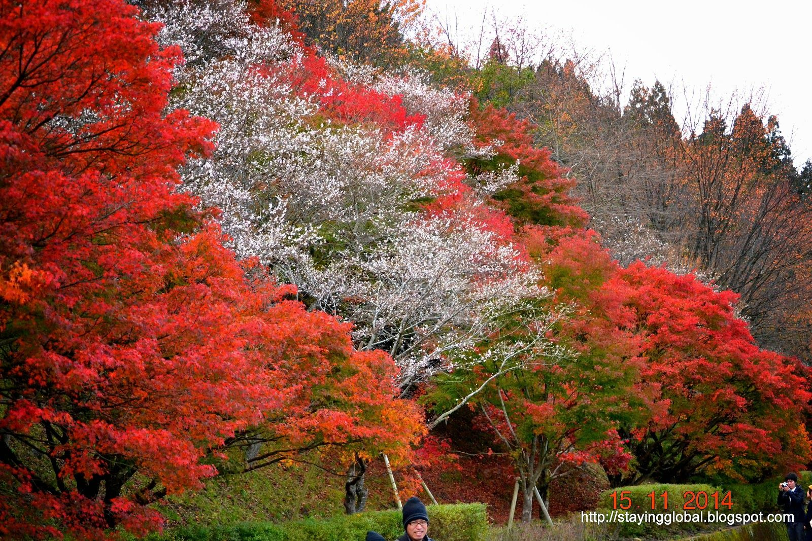 A Japanese Life Visiting Obara Cherry Blossoms In Autumn Blossom Cherry Blossom Hanami