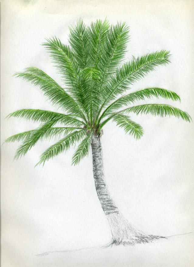 how to draw a palm tree for kids