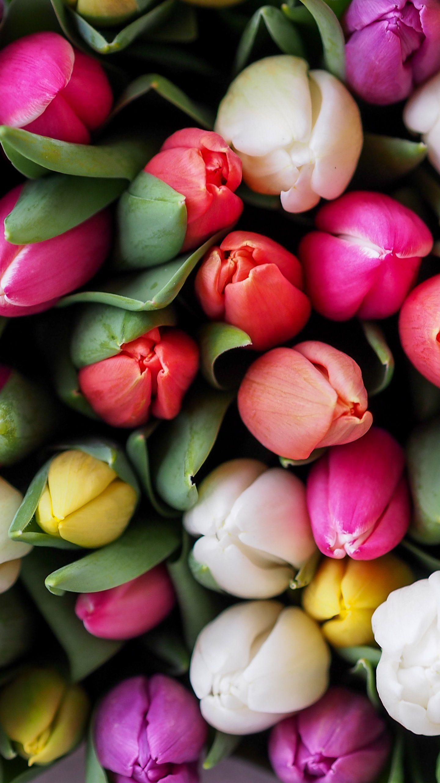 Tulips Bouquet Wallpaper Iphone Android Desktop Backgrounds Spring Flowers Background Flower Background Wallpaper Flower Backgrounds Flower wallpaper for mobile phone