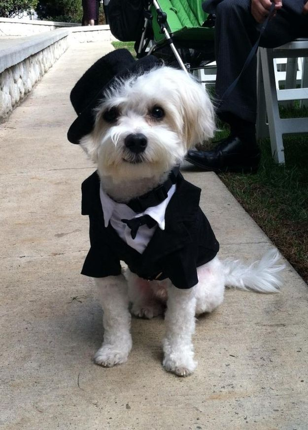 Wait Where Did I Put The Rings Dog Wedding Outfits Cute