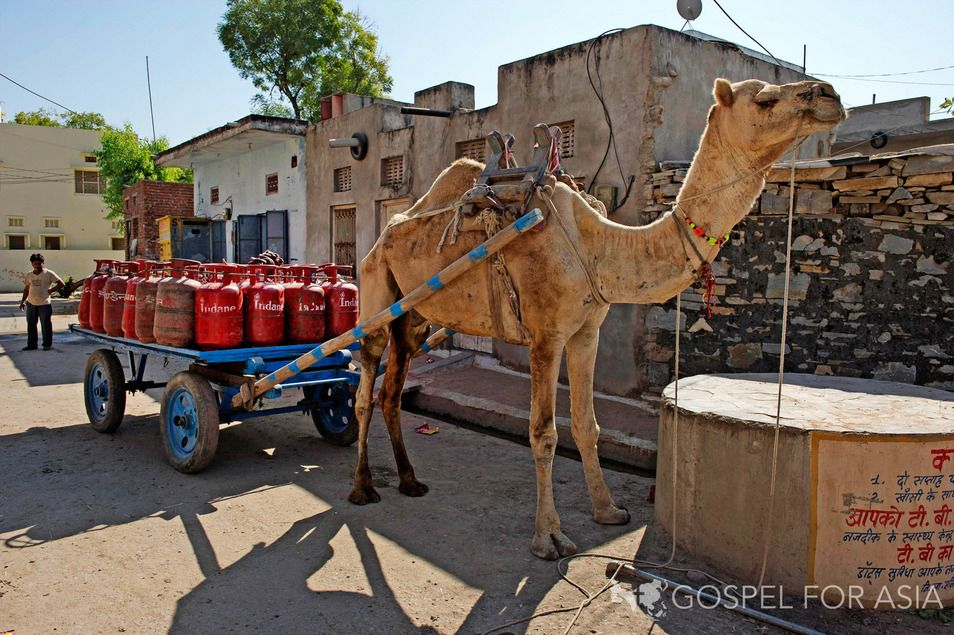 Christmas Gift: Camels. Camels open the door for missionaries to share the Gospel with desperate people in desert regions like Rajasthan.