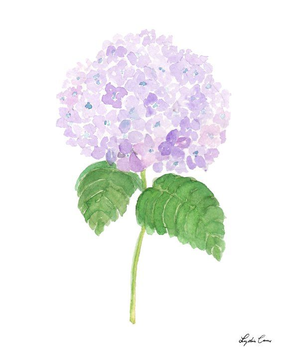 Lavender Hydrangea Art Print Etsy Hydrangeas Art Floral Watercolor Paintings Hydrangea Painting