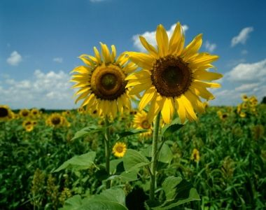 Forgiveness Is A One Way Street By Ruth Soltman Sunflower Seeds