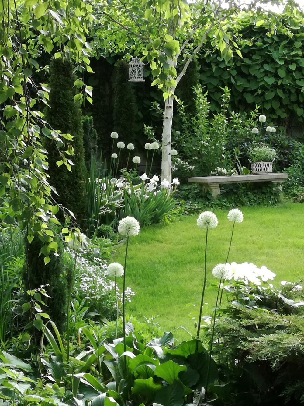 Ogrod Tamaryszka Spojnosc W Ogrodzie White Gardens Modern Garden Flower Garden